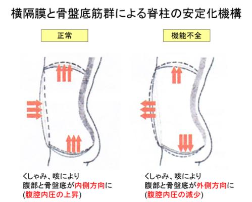 腰痛を治すには横隔膜と骨盤底筋群の連動性が重要【Zone of Appositionについて】